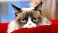Grumpy-Cat-dead
