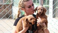 Tinsley Mortimer Dog Rescue