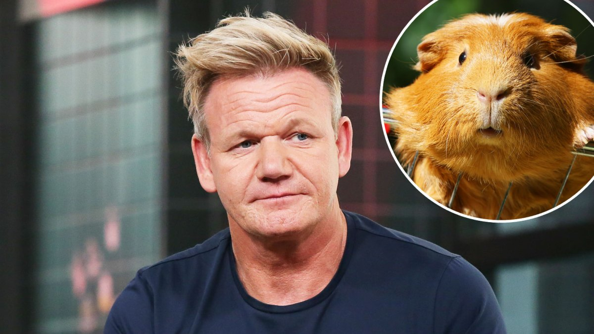 Gordon Ramsay Under Fire for Saying Guinea Pigs Are 'Delicious': 'Those Poor, Sweet Pigs'