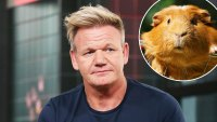 Gordon Ramsay Under Fire for Saying Guinea Pigs Are Delicious