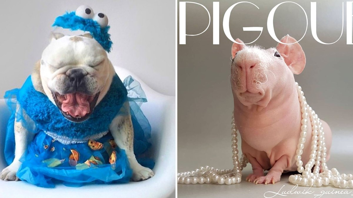 Us Weekly's Petformers Awards 2019: Vote for Outstanding Achievement in Costuming