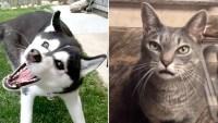 Us Weekly Petformers 2019 Complete Winners List