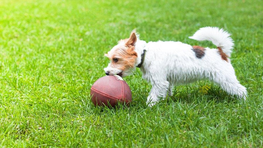 dog-playing-football