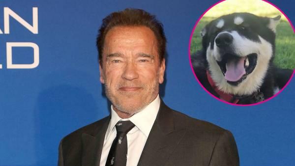 Arnold Schwarzenegger New Dog Dutch Named After Predator Character
