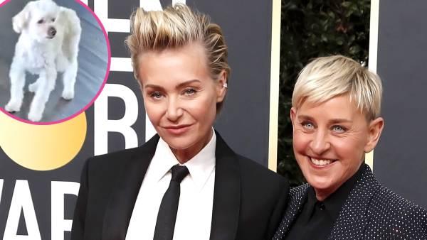Ellen DeGeneres Portia de Rossi Say Goodbye Beloved Dog Wolf
