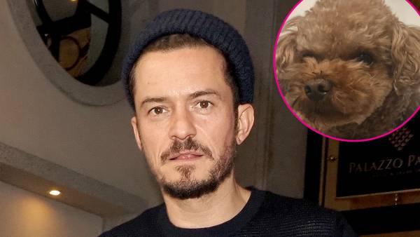 Orlando Bloom dog missing
