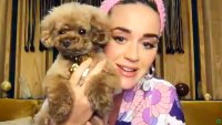 Katy Perry and her Dog Nugget Pregnant Katy Perry Shares Daughter Hilarious Nickname during July 2020 Hits Radio interview