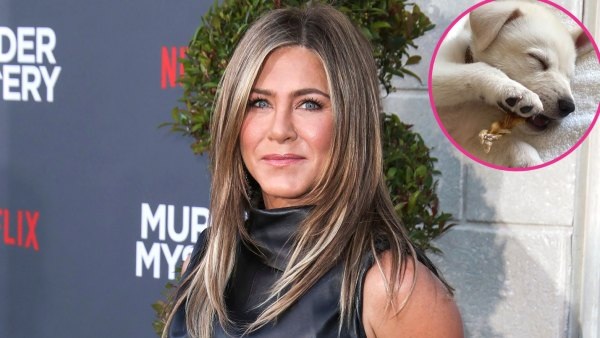 Jennifer Aniston Introduces New Rescue Puppy Lord Chesterfield: 'He Stole My Heart'