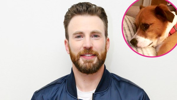 Shirtless Chris Evans Cuddles Bed With His Pup Dodger