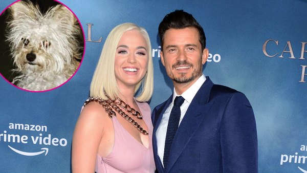 Katy Perry and Orlando Bloom Foster a New Puppy Buddy