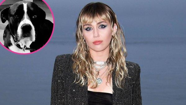 Miley Cyrus Mourns Death Angel Dog Mary Jane