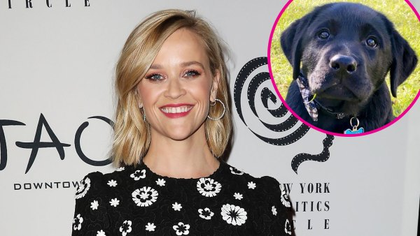 Reese Witherspoon Welcomes New Labrador Puppy to Her Family p