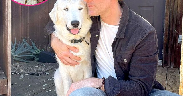 James Van Der Beek's Family Adopts Foster Dog Named Theo: 'We Have Been Incredibly Blessed'.jpg