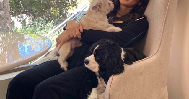 Pregnant Olivia Munn Shows Baby Bump While Cuddling With Dogs: Photo.jpg