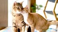 cute-cats-36a570a0-d0e2-468d-9ec4-21853488ef48