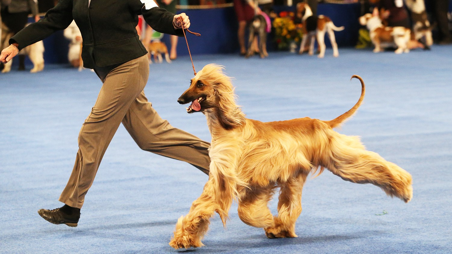 THE NATIONAL DOG SHOW PRESENTED BY PURINA -- 2015