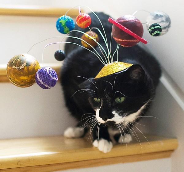 Outrageous Products Spoil Cat Princess