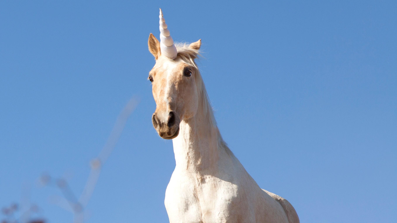 unicorn-7e8910de-0d70-4f80-8d93-6b40a9242850