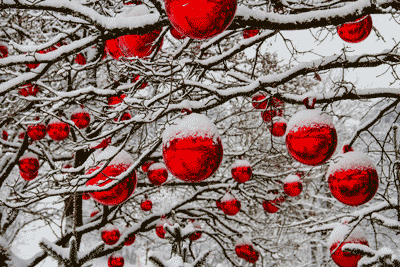 Snow covered trees with red holiday ornaments