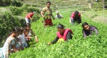 नेपालको आर्थिक वृद्धिदर ४.९ प्रतिशत