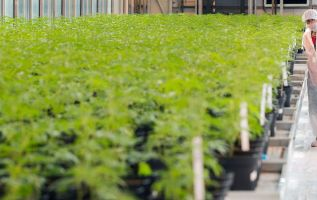 Pot stocks are getting killed again, Aurora Cannabis drops 14% in US trading debut 3