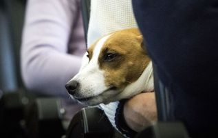 Delta bans support animals from long flights — and no puppies 2