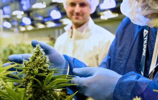 Tilray soars 23% after Peter Thiel fund says it won't trim its stake 2