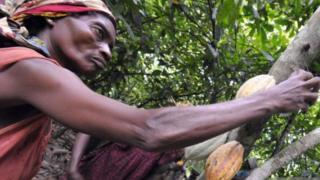 'Women cocoa farmers paid as little as 23p a day' 2