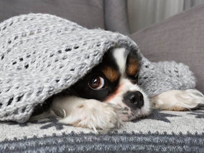 How to find the best pet insurance 1