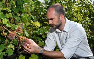 Wales' winemaking industry 'is undeterred by adversity' 3