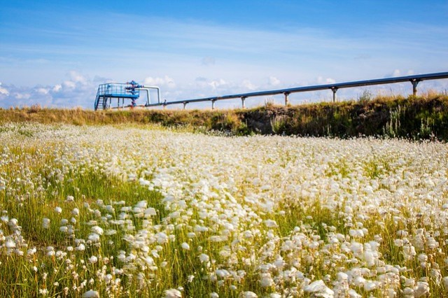Flowers in front of an oil pipeline