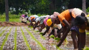Barilla Foundation Brings Health and Climate Together in New Double Pyramid 1