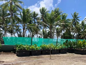 Atoll Nation of Tuvalu Adopts 'Cubes' to Step Up Nutritious Food Production 1
