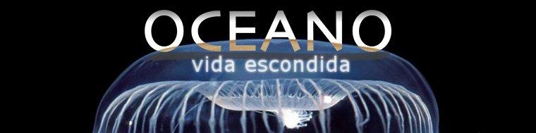 Oceano: vida escondida