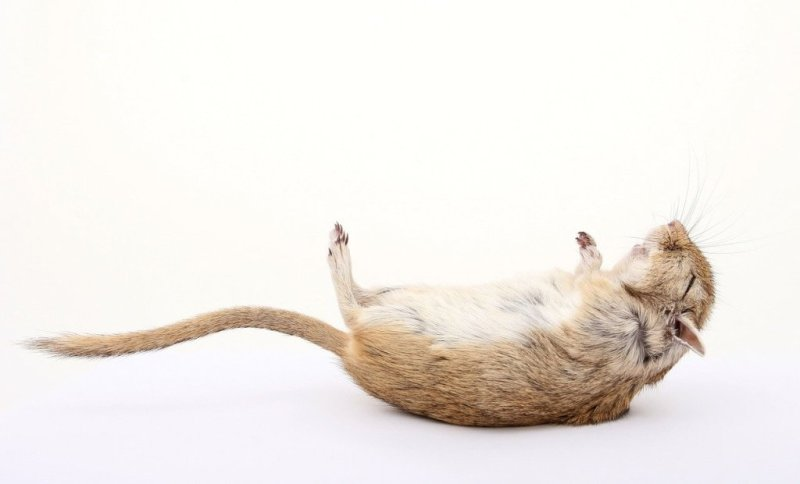 How to Prevent a Rat Infestation