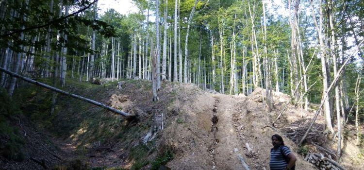 Anchetă în Parcul Național Semenic, în urma interpelării senatorului USR Mihai Goțiu