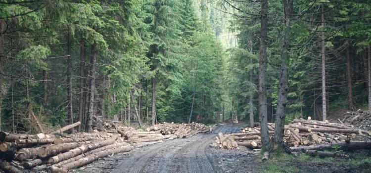 USR acuză Poliția și pe ministrul demis al Apelor și Pădurilor de favorizarea tâlharilor care distrug pădurile României