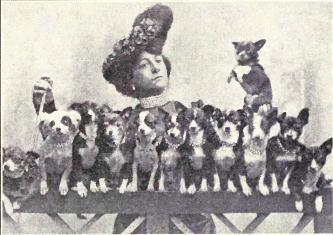 W. E. Mason - Dogs of all Nations