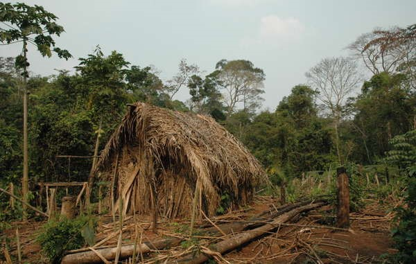 Fig. 2. Pessoa, J., and David Maxwell Braun. Lone Indians hut. Digital image. Last Survivor of Unknown Amazon Tribe Missing after Attack. National Geographic, 9 Dec. 2009. Web. 5 Nov. 2015.