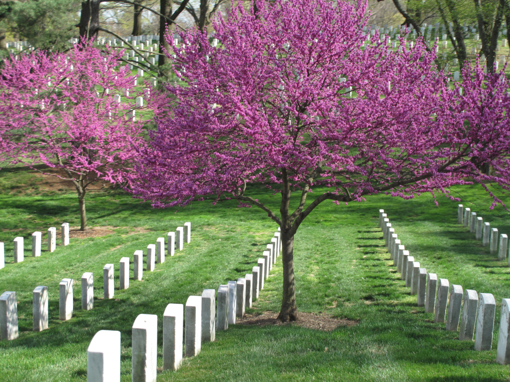 Reflections On Memorial Day >> Pretty Petals Reflections On Memorial Day Us Represented