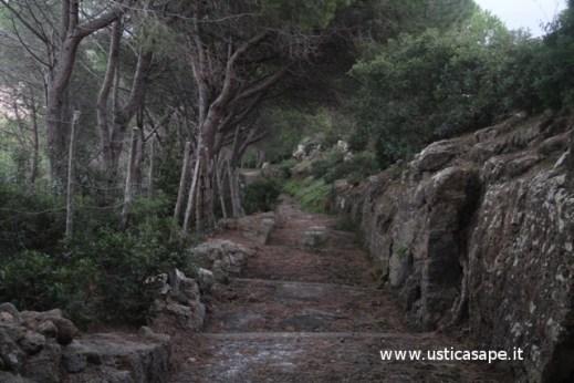 Strada del boschetto