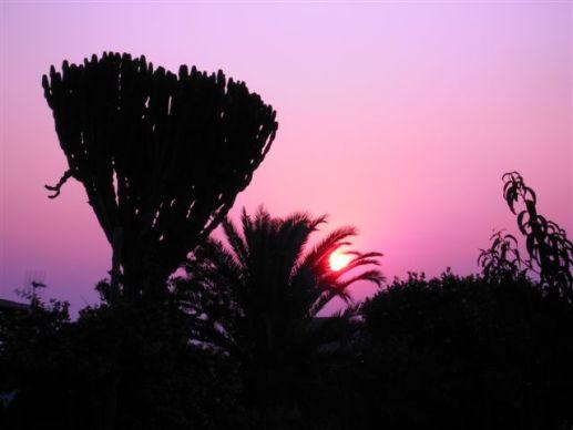 Ustica, tramonto con piante
