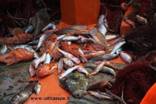Varieta' di pesci appena pescati