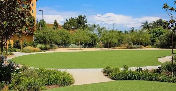 creating beautiful yard