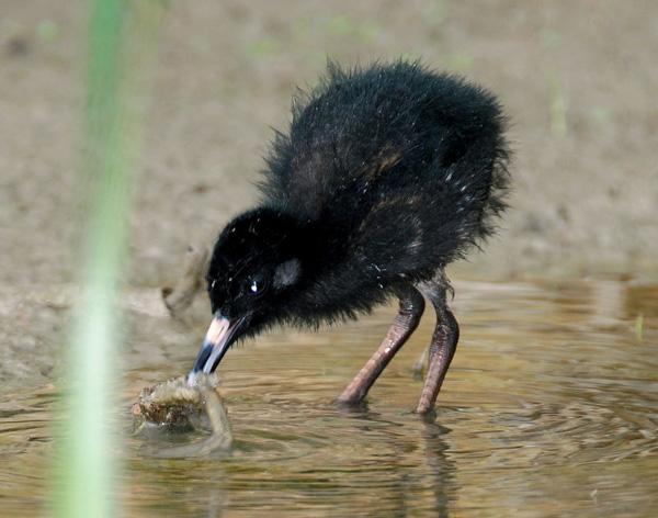 Utah Birds Baby Bird Picture Awards