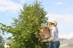 Catching my first Swarm!!!