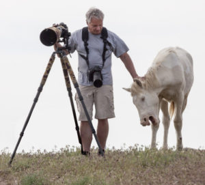 photographing wild horses, wild horses, wild horse photography