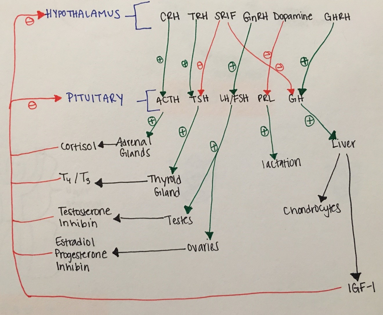 Disorders Of The Hypothalamus And Pituitary Gland