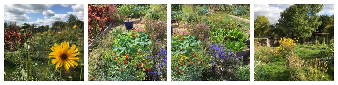 Utopaille : le jardin en image