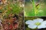 उच्च हिमालयी क्षेत्र में मिलीं 19 प्रजातियां छोटी मोटी कीटों का भक्षण कर लेते हैं खास पौधे